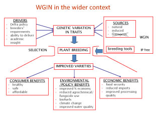 Diagram of WGIN in the Wider Context